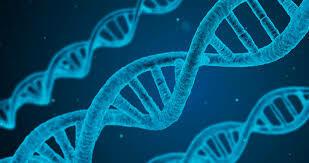 DNAren aurkikuntza