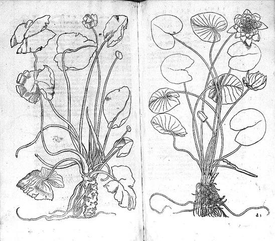 Portraits of Living Plants
