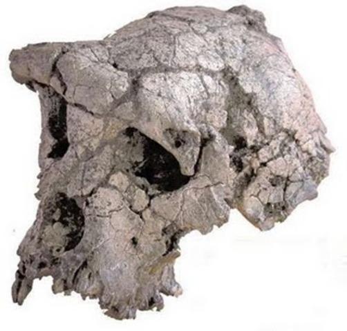 6-million-year-old hominid skull found, 2002