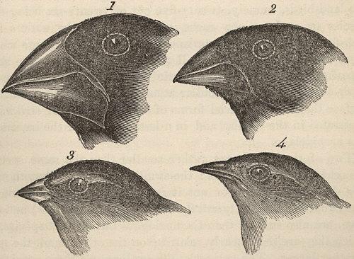 Primer borrador de la teoría de la evolución.