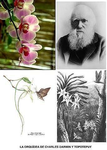 Publica Sobre la intervención de los insectos en la fecundación de las orquídeas.