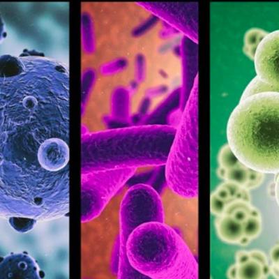 Historia de la Microbiología timeline