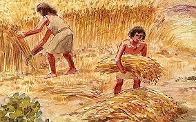 Descoberta de l'agricultura