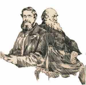 Darwin y Wallace.  La selección natural