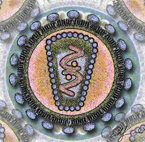 1981 Virus de Inmunodeficiencia Adquirida (VIH)