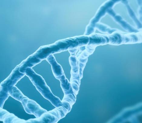 DESCIFRAN ADN