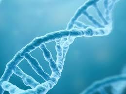 Desxifren el ADN