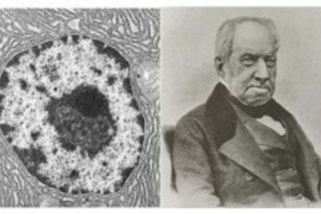 Nucli de la cèl·lula