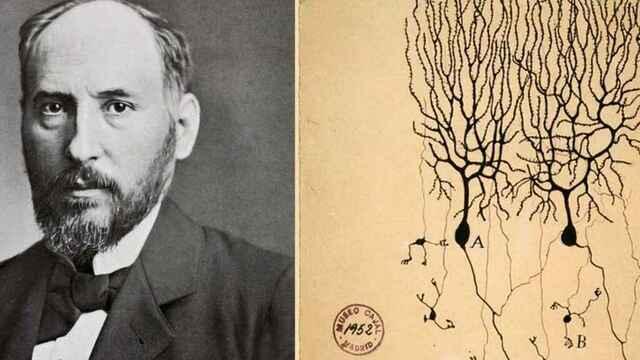 La neurona de S.Ramón i Cajal