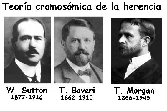 Cromosoma: localització genètica