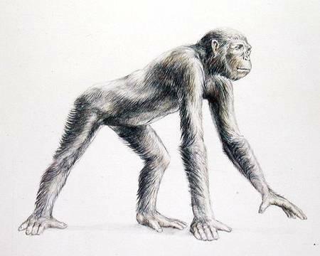 Dryopithecus (25 milions d'anys)
