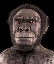 Homo habilis (2,4 milions d'anys)