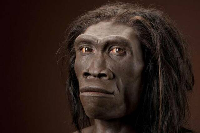 Homo erectus (2 milions d'anys)