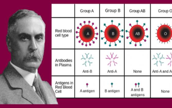 Factor sanguíneo Rh