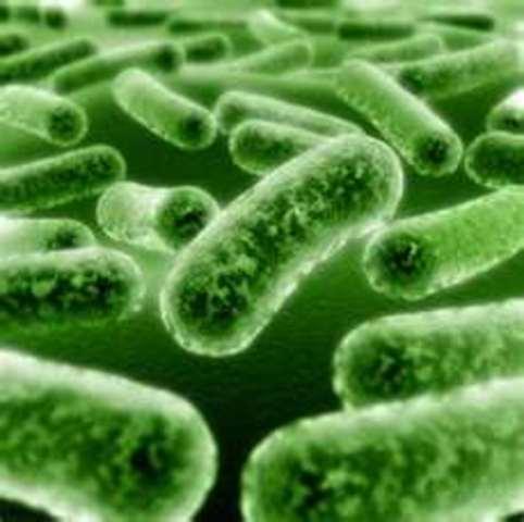 Tuberculosis (TB) research