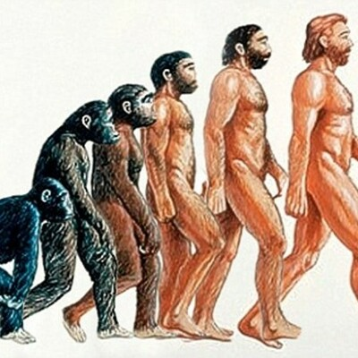 la evolución del hombre timeline