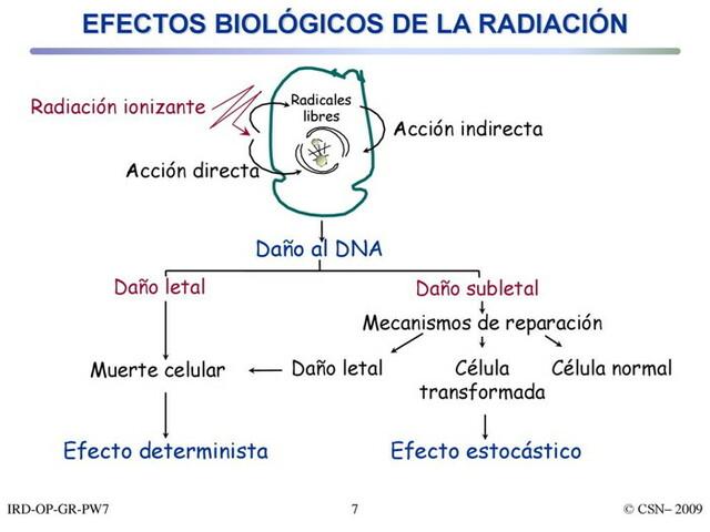 1895  Efectos Biológicos de la Radiación