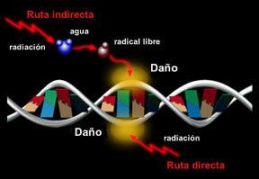 1897 Efectos Biológicos de la Radiación
