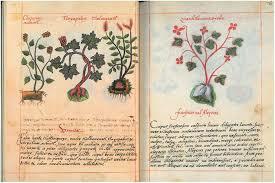 Recetario Libellus de medicinalibus indorum herbis