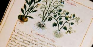 """Capítulos """"cosas medicinales"""" del códice Florentino."""