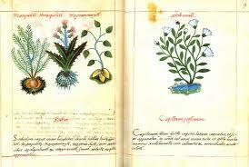 Publicación de Libellus Medicinalibus Indorum Herbis