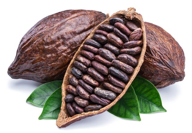 Llegada del cacao a Venezuela