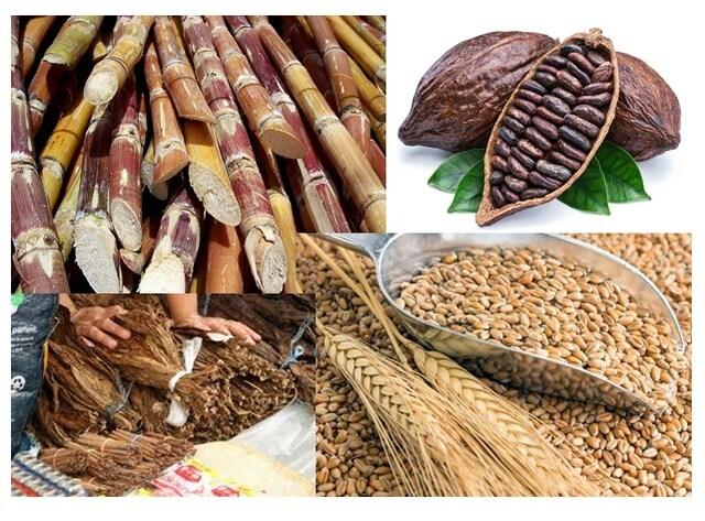 Explotación agrícola de cacao, trigo, tabaco y caña de azúcar