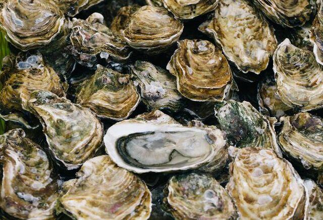 Oyster Population
