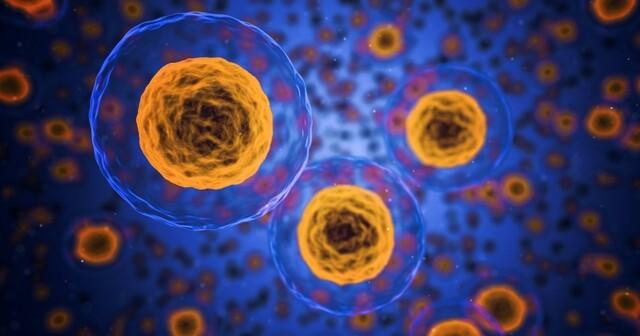 Efectos biológicos de la radiación ionizante.