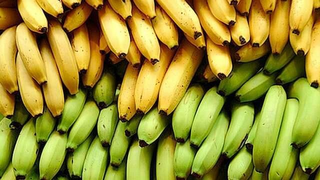 Cultivo de plátano en Venezuela