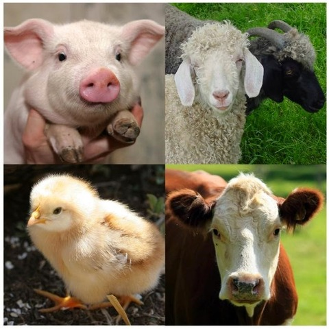 El sector animal y sus derivados