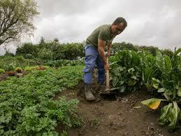 Problema agrario