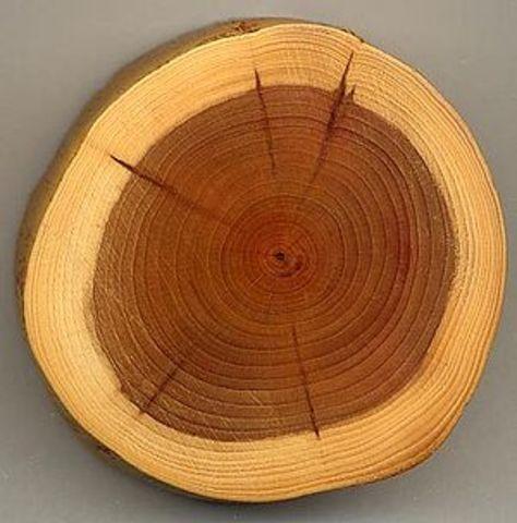 Woodology.