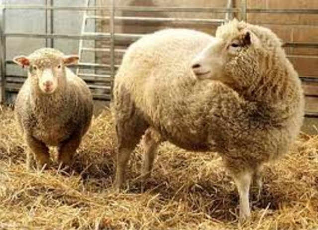 Scientists cloned Dolly the sheep