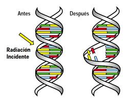 Efectos biológicos de la radiación (evento 4)