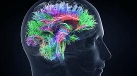 las neurociencias de la conducta, un viaje que no se detiene. timeline