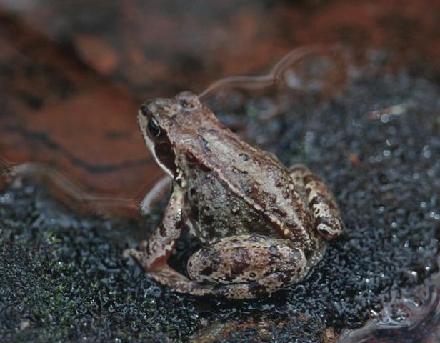 De første amfibiene