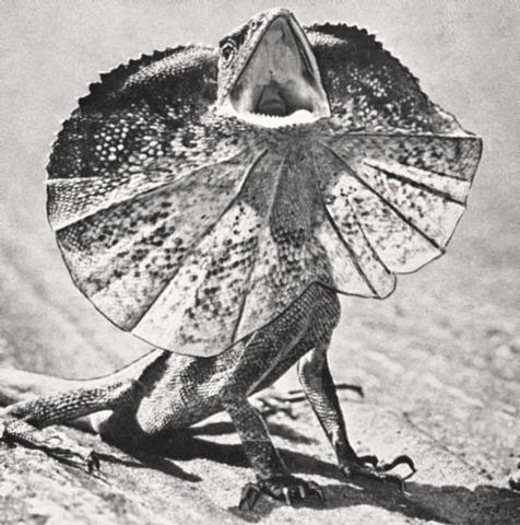 De første krypdyrene