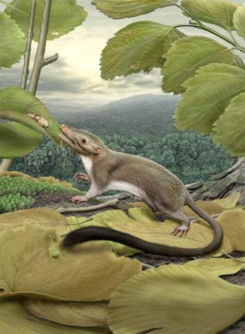 De første pattedyrene