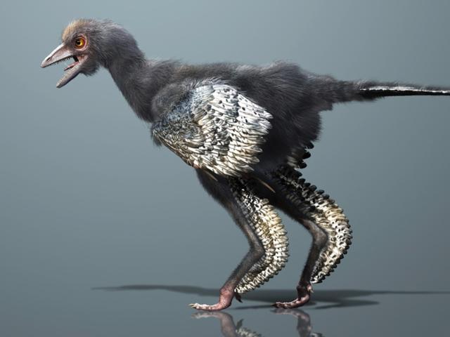 De første fuglene
