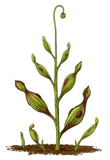 De første plantene