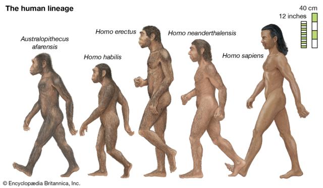 Første menneskene på jorda