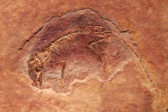 Eldste fossil som er funnet