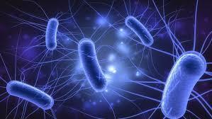Jordas første organismer