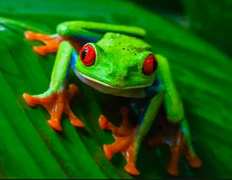 Første amfibier