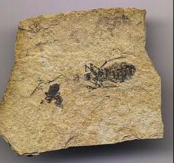 De første insektene