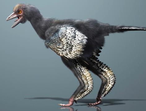 Første fuglene