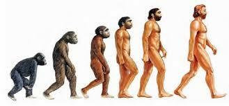 La aparicio dels hominids