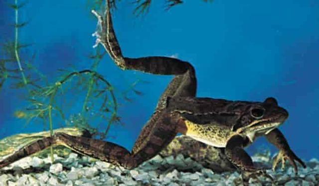 Jordas første amfibier