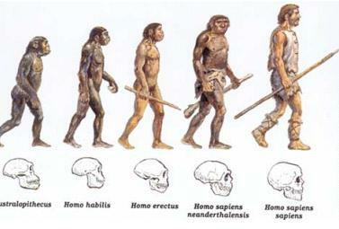 Aparición de los primeros homínidos.
